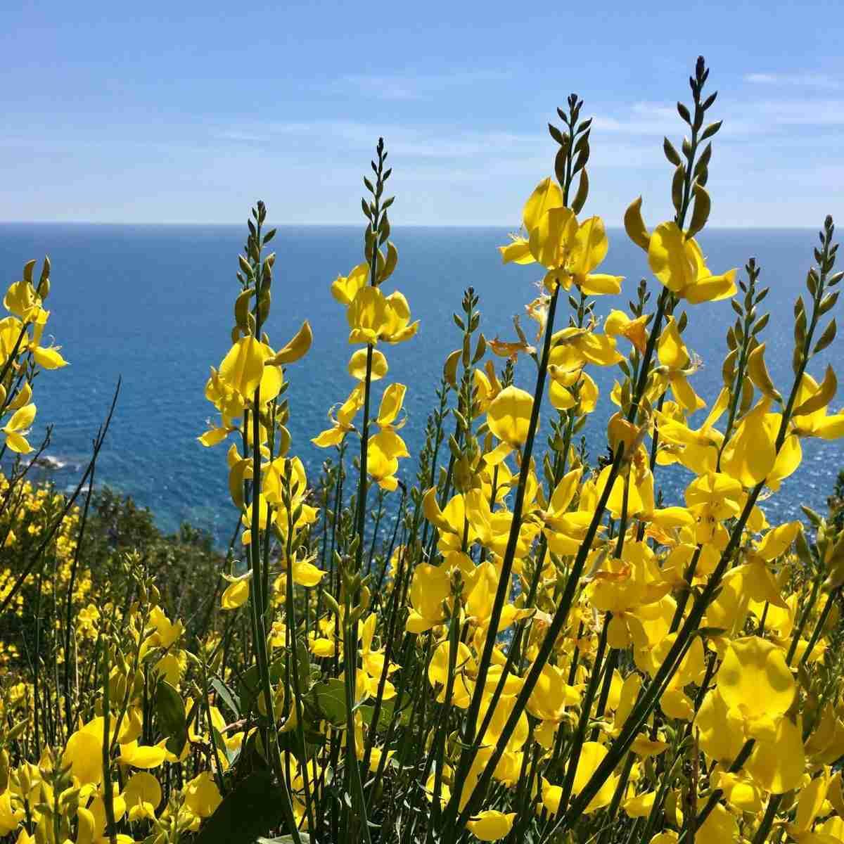 Meeresblick durch die Blume