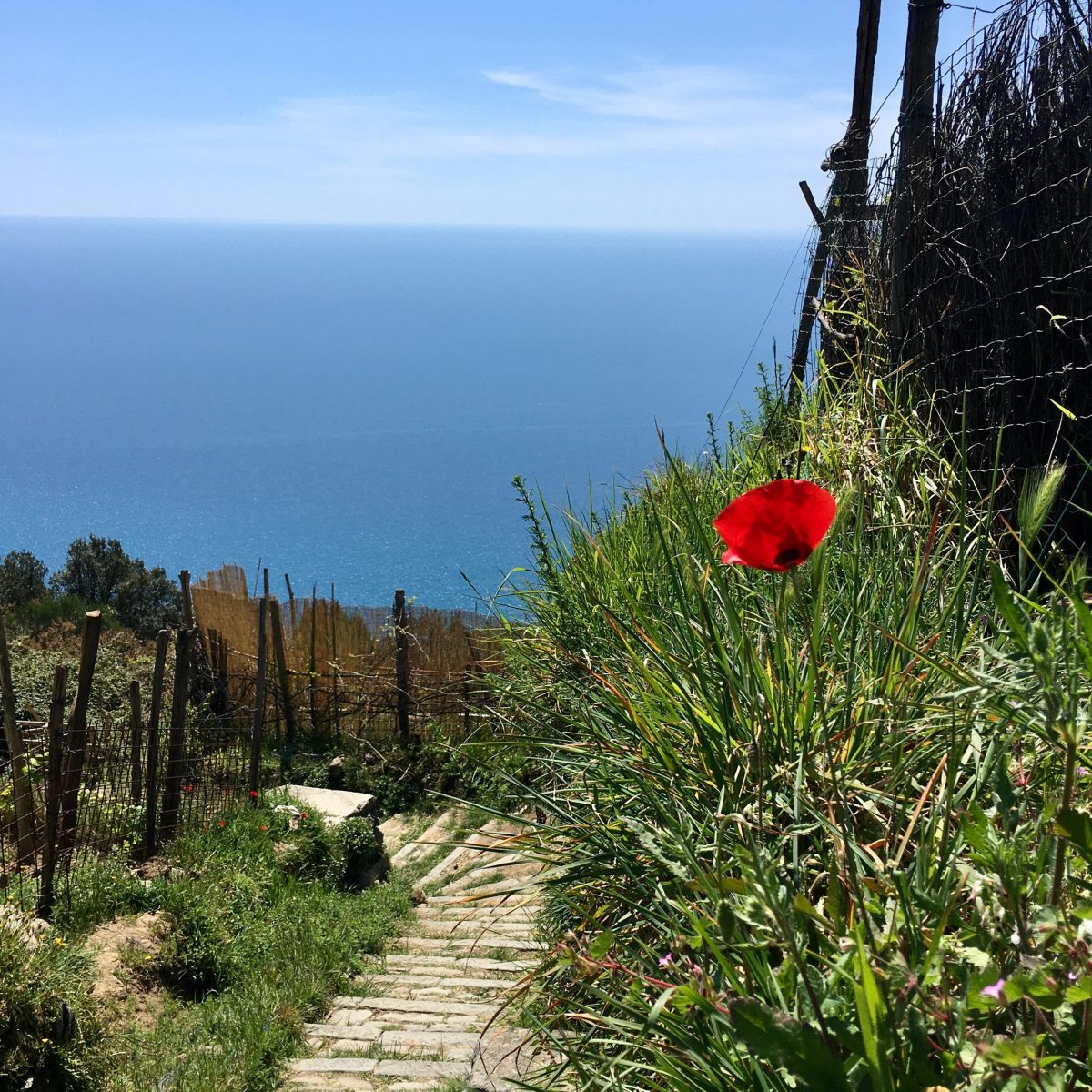 Wanderung ab Campiglia