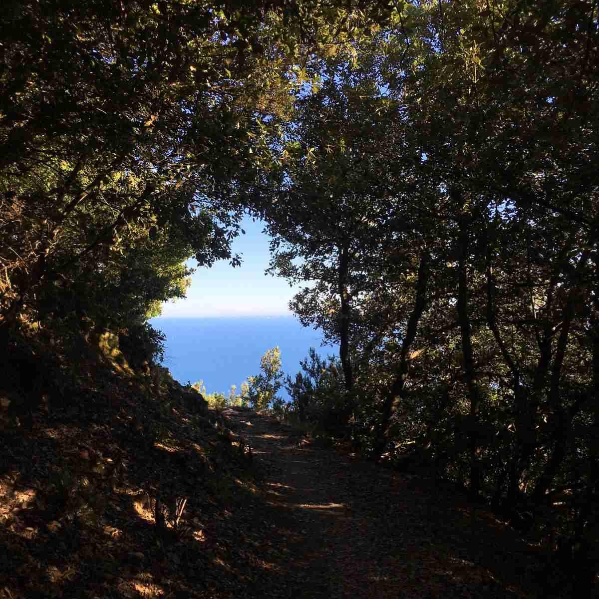 Wanderweg im Wald mit Sicht aufs Meer